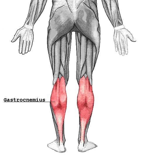 Gastrocnemius - OrthopaedicsOne Articles - OrthopaedicsOne