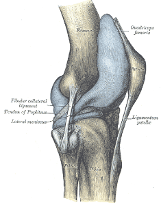 Knee joint orthopaedicsone articles orthopaedicsone lateral and posterior aspects of the right knee ccuart Gallery